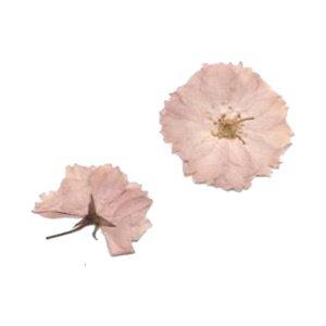 pressed pink flowers