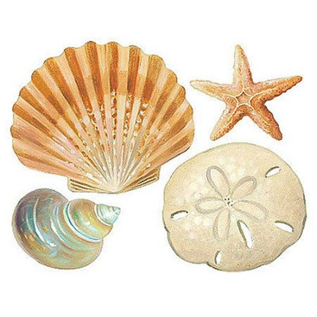 sea shells - Google Search