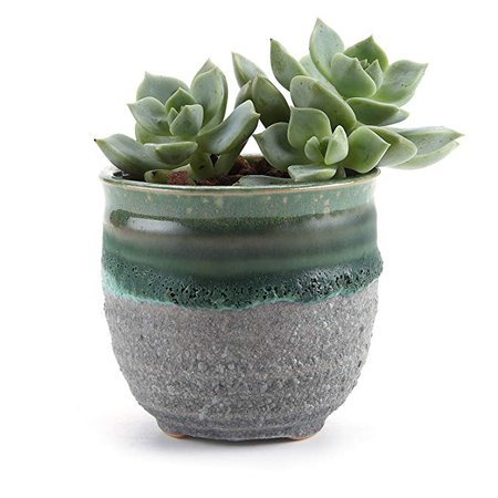 T4U 2.75 Inch Ceramic Summer Trio No.2 succulent Plant Pot/Cactus Plant Pot Flower Pot/Container/Planter Yellow: Amazon.ca: Patio, Lawn & Garden