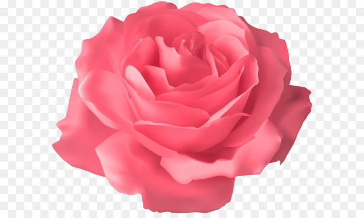 Pink Rose Clipart (Icon Supplies)