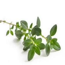 thyme leaves - Google Search