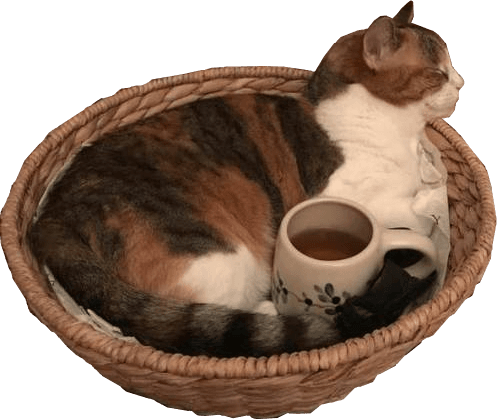 Cozy Cat Png