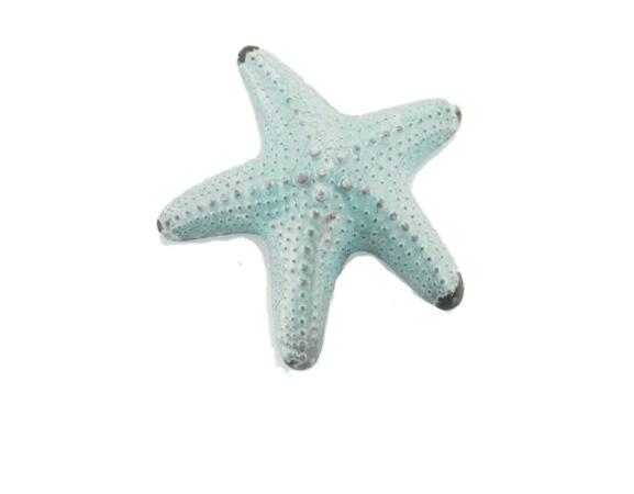 Pastel Blue Starfish png