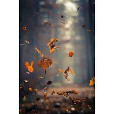 autumn polyvore backgrounds - Google Search