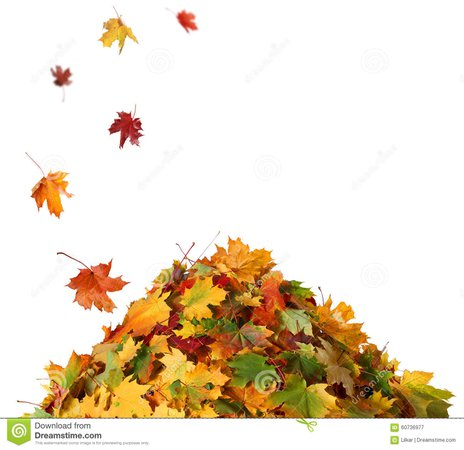 pile-fall-leaves-isolated-white-background-60736977.jpg (1300×1260)