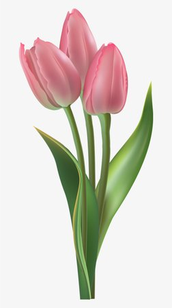 pink tulips - Google Search