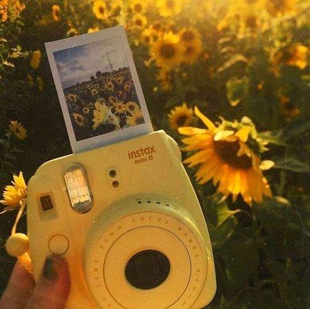 sunflower camera
