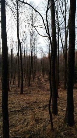 Ich liebe Wälder <3 | nature, autumn e tree