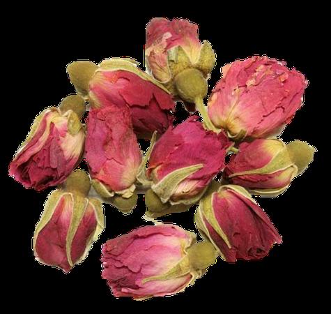 rose buds roses