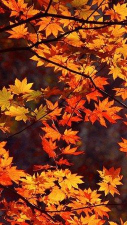 autumn aesthetic