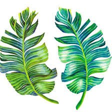 print banana leaves - Cerca con Google
