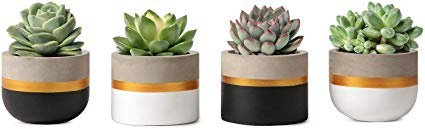 Amazon.com : Mkono 3 Inch Mini Cement Succulent Planter Modern Concrete Cactus Plant Pots Small Clay Indoor Herb Window Box Container for Home and Office Decor, Set of 4 (Plant NOT Included) : Garden & Outdoor