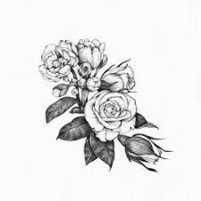 rose illustration - Google Search