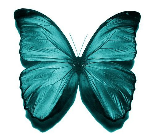 teal butterfly - Google Search