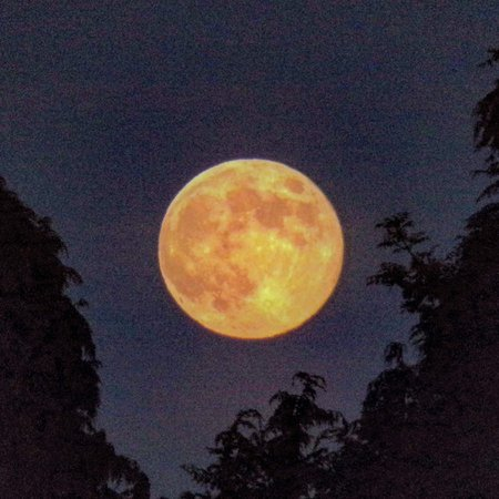 Yellow Moon. This is a photo of the moon I took almost a month ago
