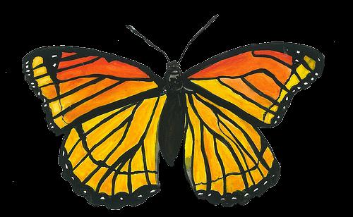 butterfly orange tumblr aesthetic vaporwave...