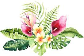 tropical flower png - Google Search