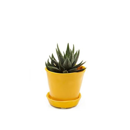 yellow potted plant green