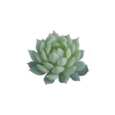 succulent / polyvore | polyvore pngs in 2018 | Pinterest | Green, Polyvore and Flora