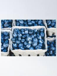 blueberry aesthetic – Google-Suche