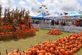 pumpkin patch - Google Search