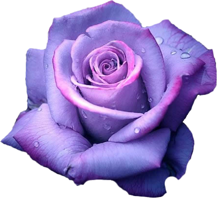 Light-Purple Rose (Clipart)