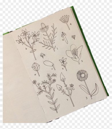#plants #aesthetic #tumblr #book - Sketch, HD Png Download - 1024x1024(#4429542) - PngFind