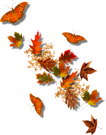 fall transparent decor