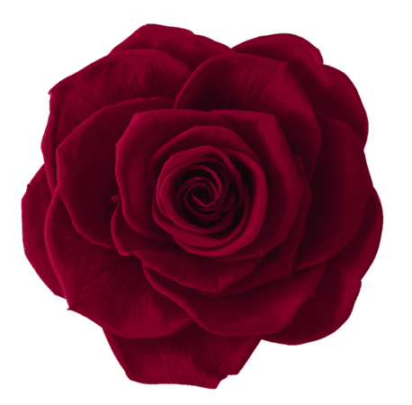 Red Rose (Icon clipart)