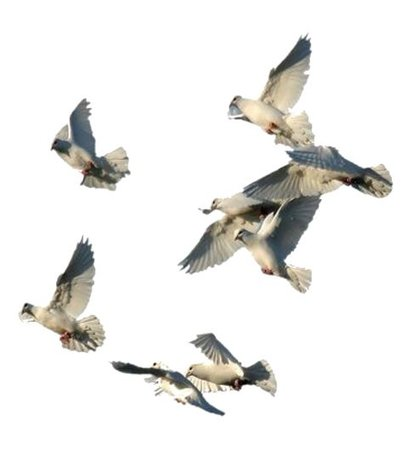 white birds png filler dove mood