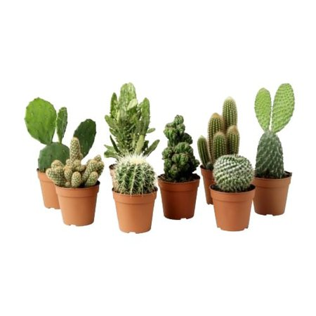 plants are cute #plants discovered by ɳιƈσʅҽ 🌿