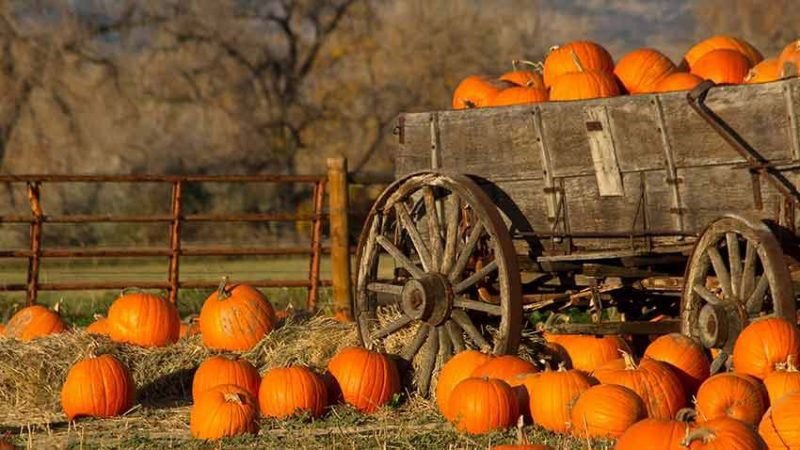 Local Pumpkin Patches that Make a Difference - Chase Oaks Church