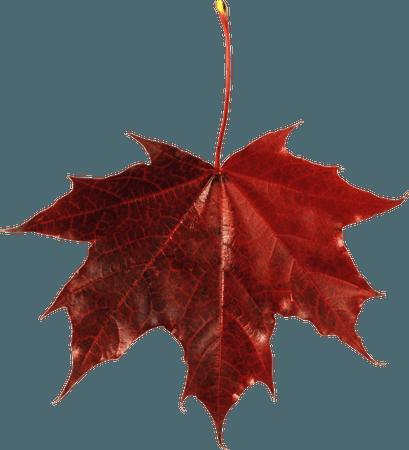42-428822_autumn-png-leaf-fall-leaves-clip-art-transparent.png (3192×3512)