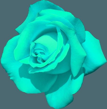 Aqua Rose (clipart for icons)