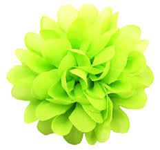 lime flower - Google Search