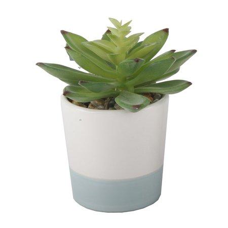 Wrought Studio 2 Piece Desktop Succulent Plant Set & Reviews | Wayfair
