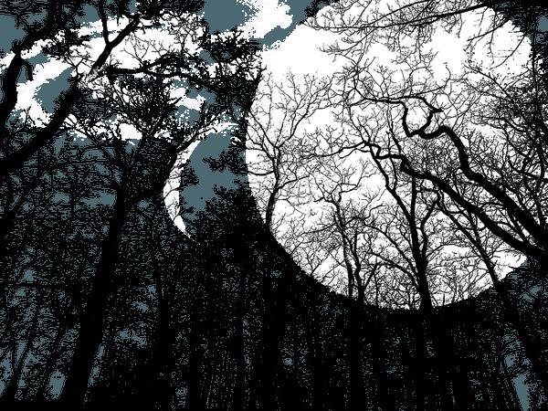 Transparent Background Moon Forest - Free photo on Pixabay