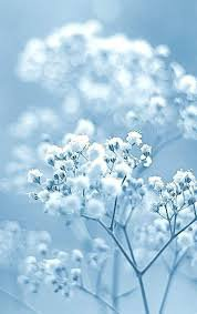 blue flower aesthetic - Google Search