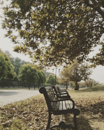 outdoorspastelnature: Autumn Aesthetic F - 9 park Islamabad | Wild Wonderful Earth | Autumn aesthetic, Park,
