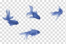 blue fish transparent background - Google Search