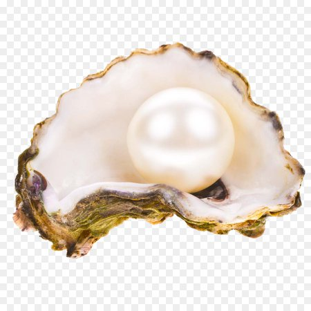 Oyster Pearl Seashell Stock photography - pearl png download - 1100*1100 - Free Transparent Pearl png Download.