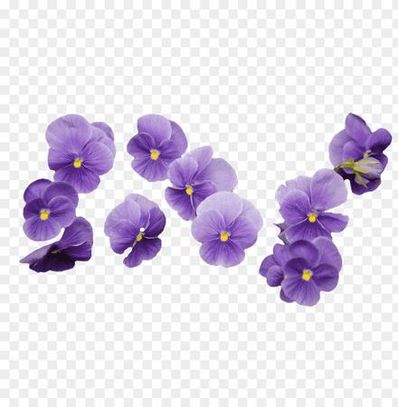 purple-flower-transparency-11552506348s7mqyhbdkg.png (840×859)