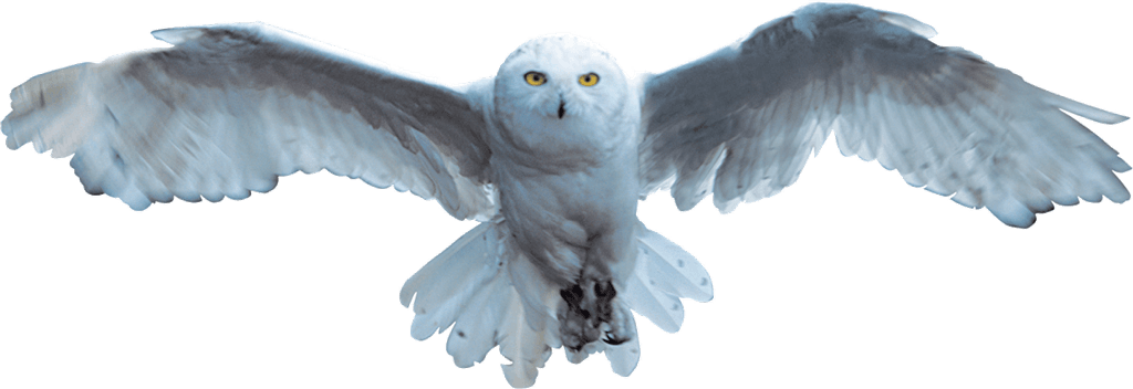 harry potter hedwig transparent