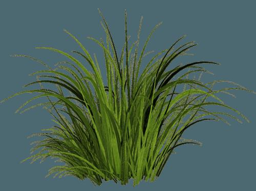 Grass transparent PNG - StickPNG