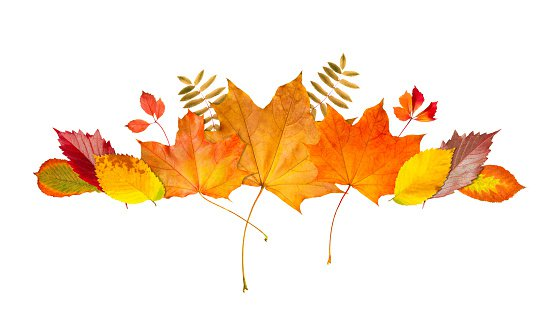 Autumn Leaf Frame Border Banner Of Leaves And Branches Isolated On White Background Autumn Illustration For Greeting Cards Wedding Invitations Quote And Decorations Stock Illustration - Download Image Now - iStock