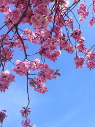blue and pink flower aesthetic. - Google Search