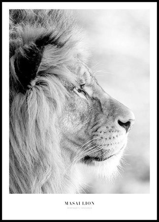 Masai Lion Poster - Posterstore.co.uk
