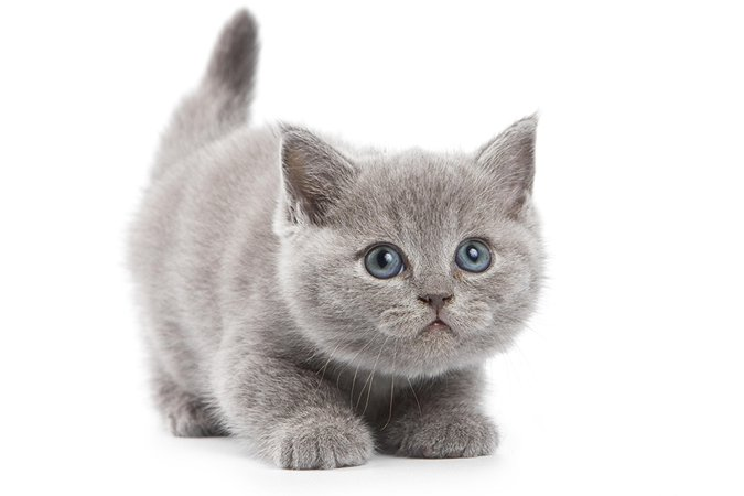 grey kitty - Google Search