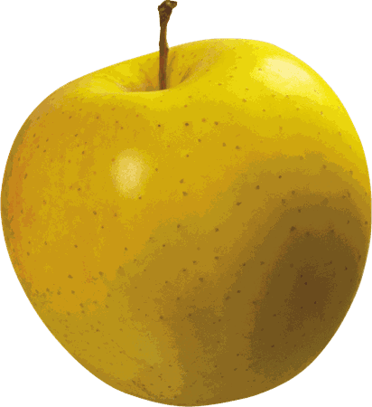 Apple Cameo Yellow Large transparent PNG - StickPNG