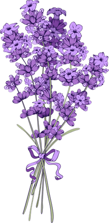 19 Wolfsbane drawing bunch lavender